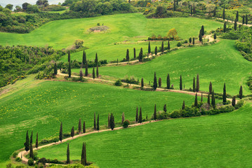 Tuscany, rural sunset landscape. Countryside farm, cypresses trees, green field,Italy, Europe.
