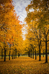 Foto op Canvas Landschappen autumn alley in yellow trees