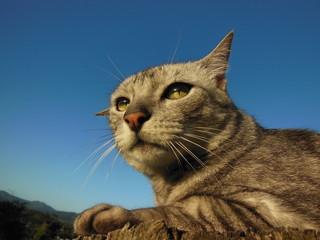Gato deitado no jardim com o céu azul ao fundo