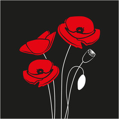 Red Poppy flower isolated on black background.