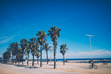 Palms and blue sky at Barcelona beach in Spain