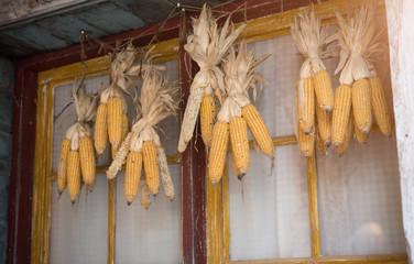 Dry corn hanging on wooden window