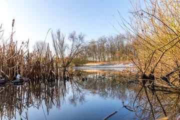 Gefrorener See in einer Winterlandschaft in Rheinhessen