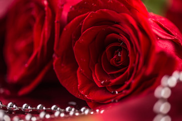 Red roses. Bouquet of red roses. Valentines Day, wedding day background. Waters drops on roses petals