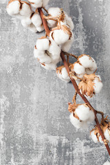 Dried cotton plant flower on old grey background. Close-up, copy space.