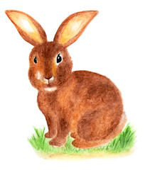 Brown cute rabbit. Furry hare. Watercolor illustration.