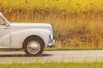 Fifties car driving by a field with blooming sunflowers