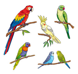 Different parrots - vector illustration