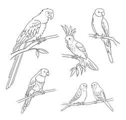Different parrots in outlines - vector illustration
