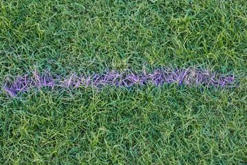 Mit lila Farbe auf einen Rasen gesprühter Pfeil