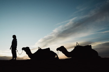 Silhouette woman standing by camels at Merzouga desert against sky during sunset