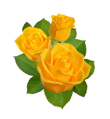 Composition with yellow roses. Isolated on white background