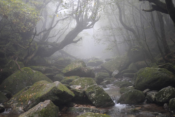 Rainforest Shiratani Trail Forest of moss Misty Forest