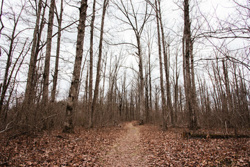 Hiking trail through the woods during winter, near Fayetteville, Arkansas