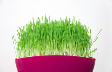 pink pot with green grass in room
