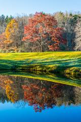 Maple Tree Reflected