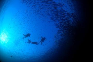 Scuba divers barracuda fish in ocean