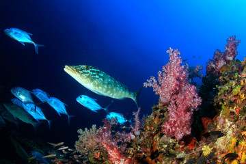 Fish underwater coral reef