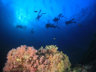 Scuba diver explores coral reef with fish