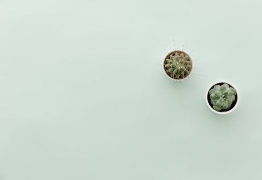 Neutral Minimalist Flat Lay Scene With Cactus
