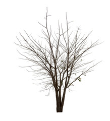Black tree silhouettes or dead tree on white background