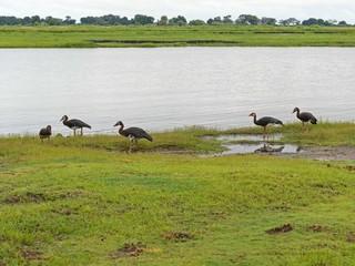 Chobe national park view