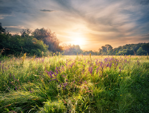 Meadow with wildflowers under the setting sun