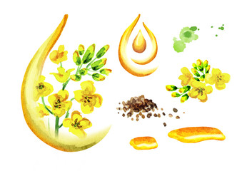 Rapeseed oil set. Watercolor  illustration, isolated on white background