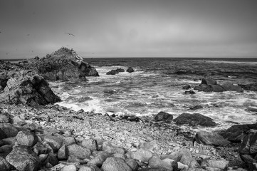 Pebble Beach Monochromatic