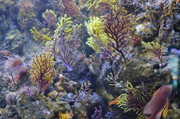 Abstract marine backround. Corals, algae and sea  exotic fish.