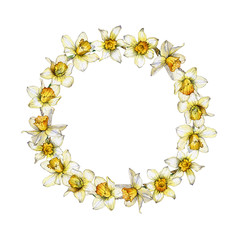 Botanical illustration of a daffodil flower wreath on white background