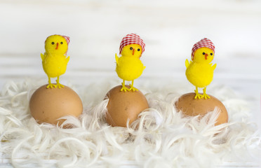 Brown Eggs,Feathers  and Chickens