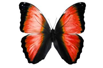 Яркая большая бабочка изолирована на белом фоне