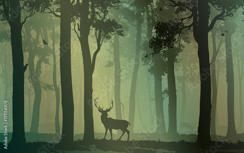 Fototapete Deciduous forest with birds and deer