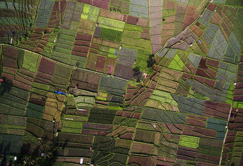 Aerial view patterns of Onion plantation located in Argapura, Indonesia