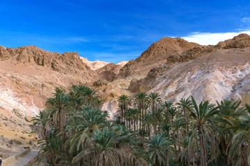 砂漠のオアシスシェビカ