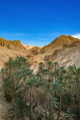 Poster de jardin Tunisie 砂漠のオアシスシェビカ