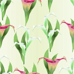 Seamless texture Calla lily white and pink flowers and leaves   herbaceous perennial ornamental plants   vintage  vector illustration editable hand draw