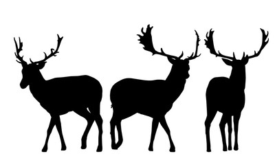 Set of vector silhouettes of three deer
