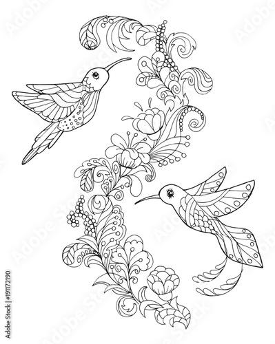 hummingbird coloring book\