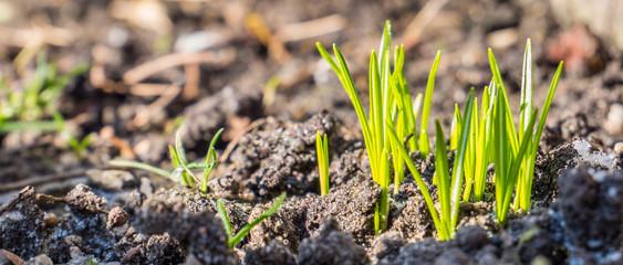 Pflanzen erwachen im Frühjahr