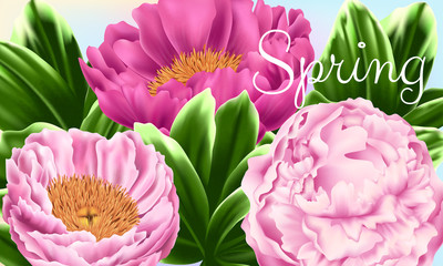 Vector Card with Pink Peonies and Green Leaves. Floral Illustration