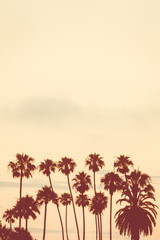 Background Image of Palm Trees at Sunset With Copy Space