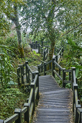 Tourist path on the Alishan slopes (Taiwan)