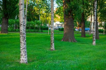 Санкт-Петербург. Один из многочисленных парков города.