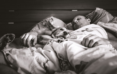 Beagle dog sleep in bed with his owner black and white image