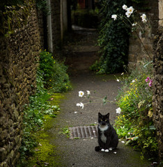 A mysterious black cat sits surrounded by flowers in a small English town alley.
