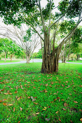More of tree and Tree branches are parkland in Bangkok, Thailand. Grass is foreground in this picture.