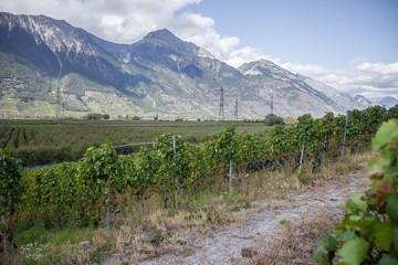 Poster de jardin Afrique du Sud Vignes en été de Fully et Charrat en Valais, Suisse