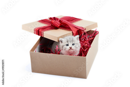 Small Adorable Grey Kitten Looking Out Of Decorated Cardboard Box Being Birthday Present